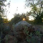 algarve-portugal-olivier