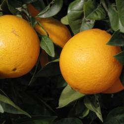 orange-douce-portugal