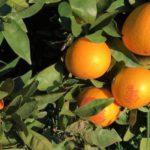 orange algarve portugal